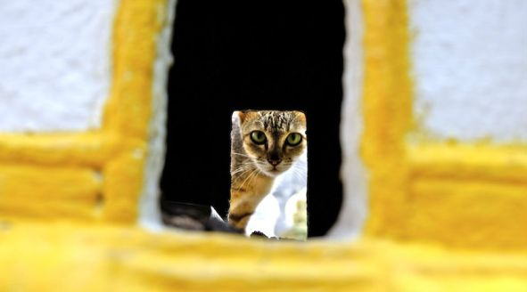 monastery cat_DSF4805